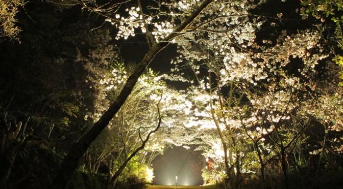 御座爪切不動尊の桜天井の夜桜
